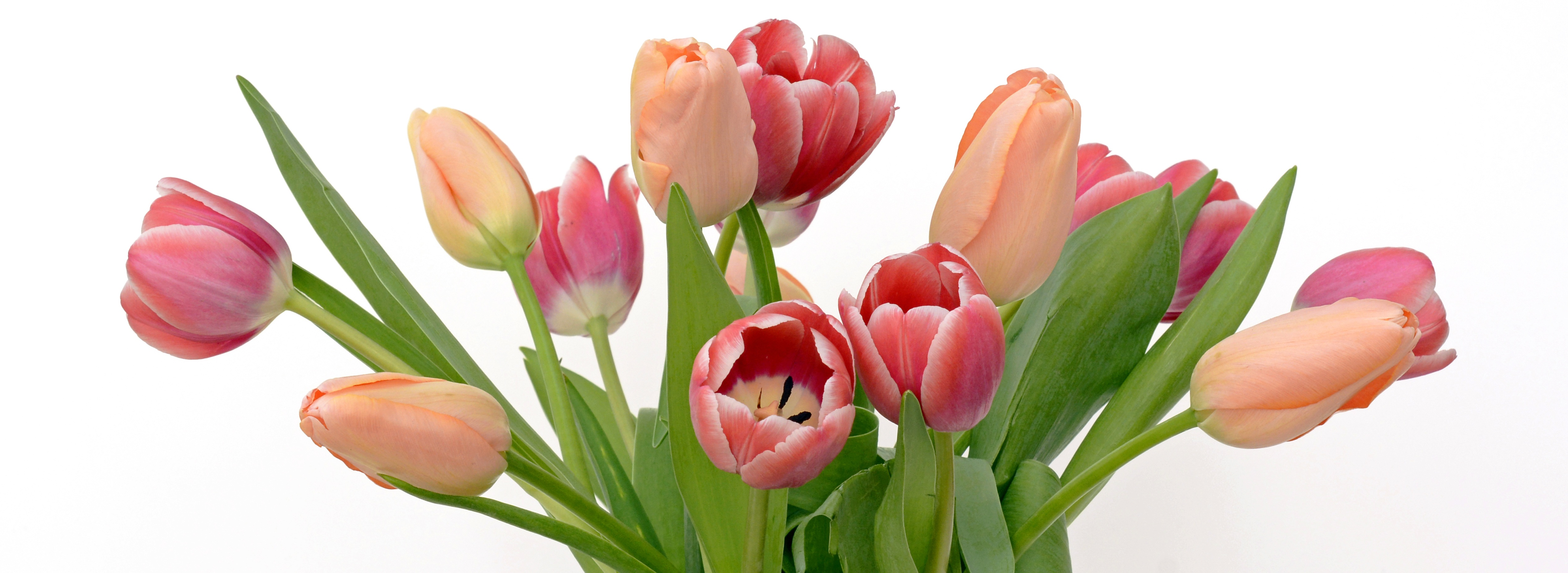 Pink and white tulips bouquet - Photopublicdomain.com