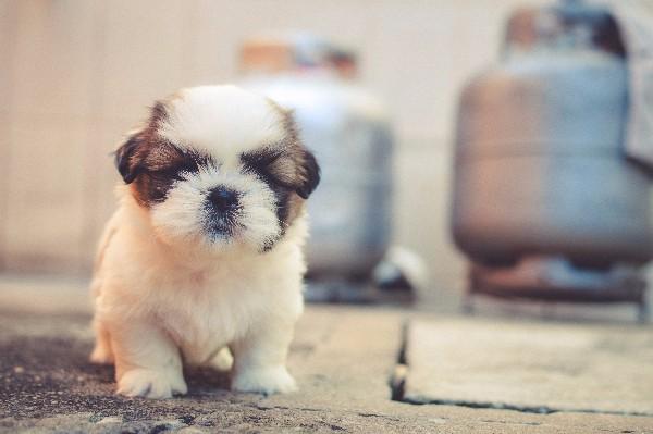 Cute puppy first steps